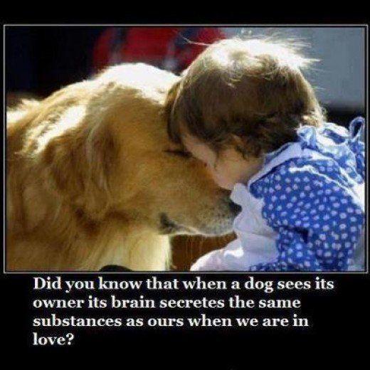 Dogs, Fun Fact Friday, Animals