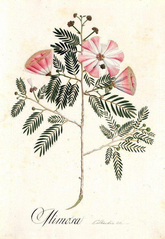 Inspiración botánica. #bodas #ideas