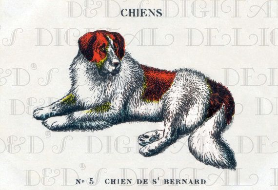 Serious FRENCH St. BERNARD Vintage Dog  by DandDDigitalDelights