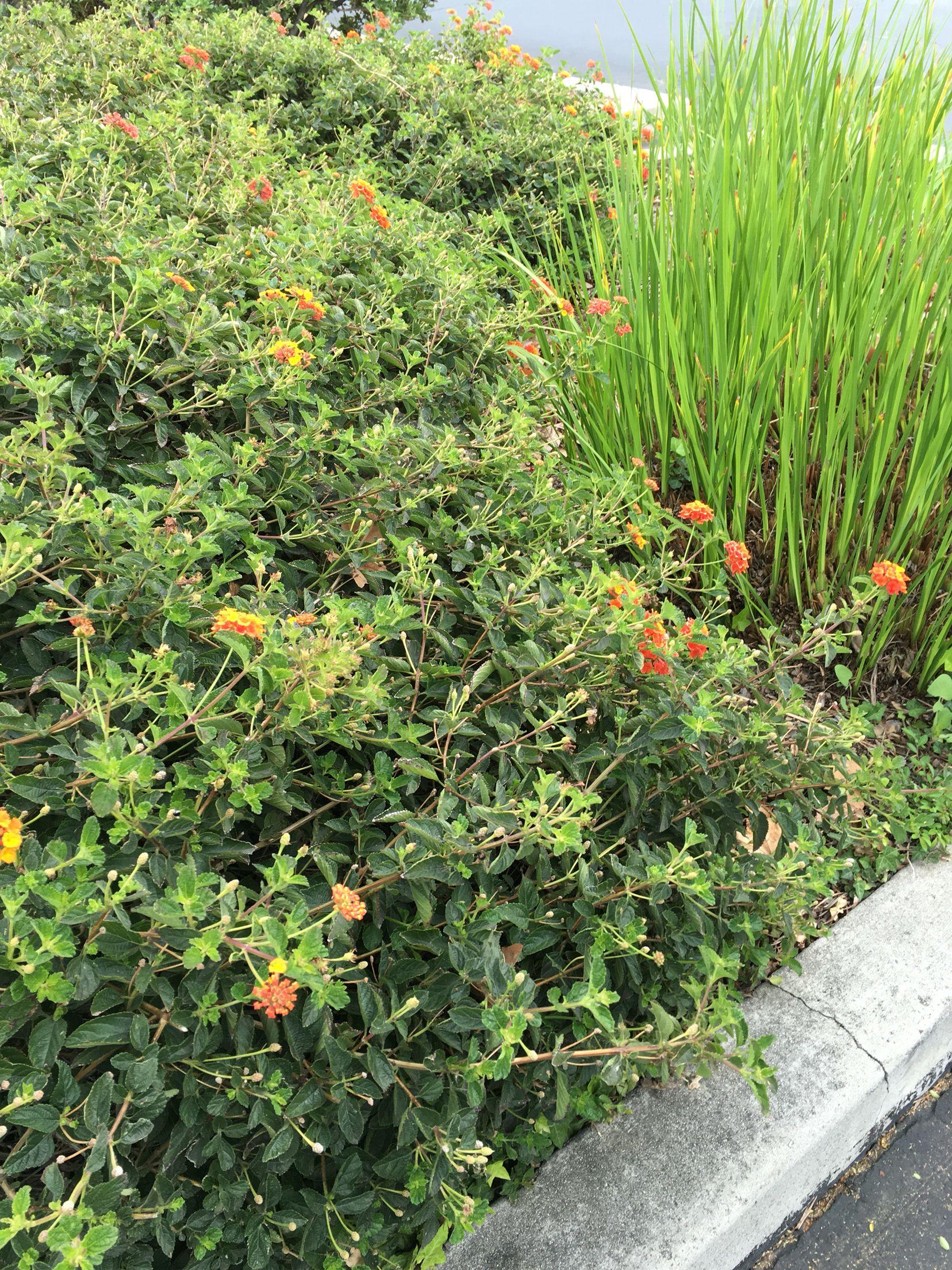 Orange flower bush with grass that has white blue yellow flowers orange flower bush with grass that has white blue yellow flowers mightylinksfo