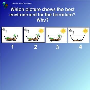Organisms living things smartboard review questions smart boards organisms living things smartboard review questions urtaz Images