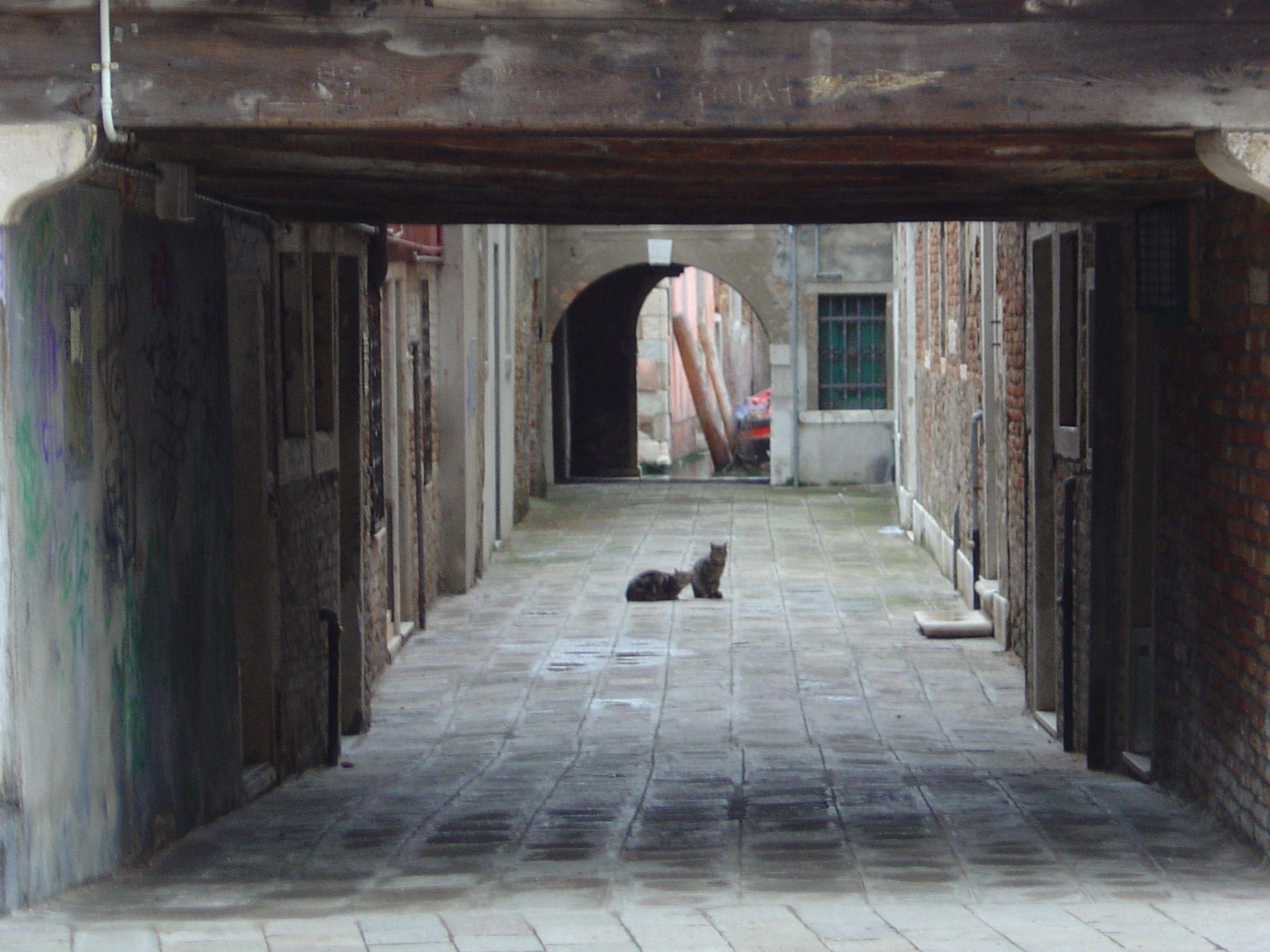 gatti a Venezia