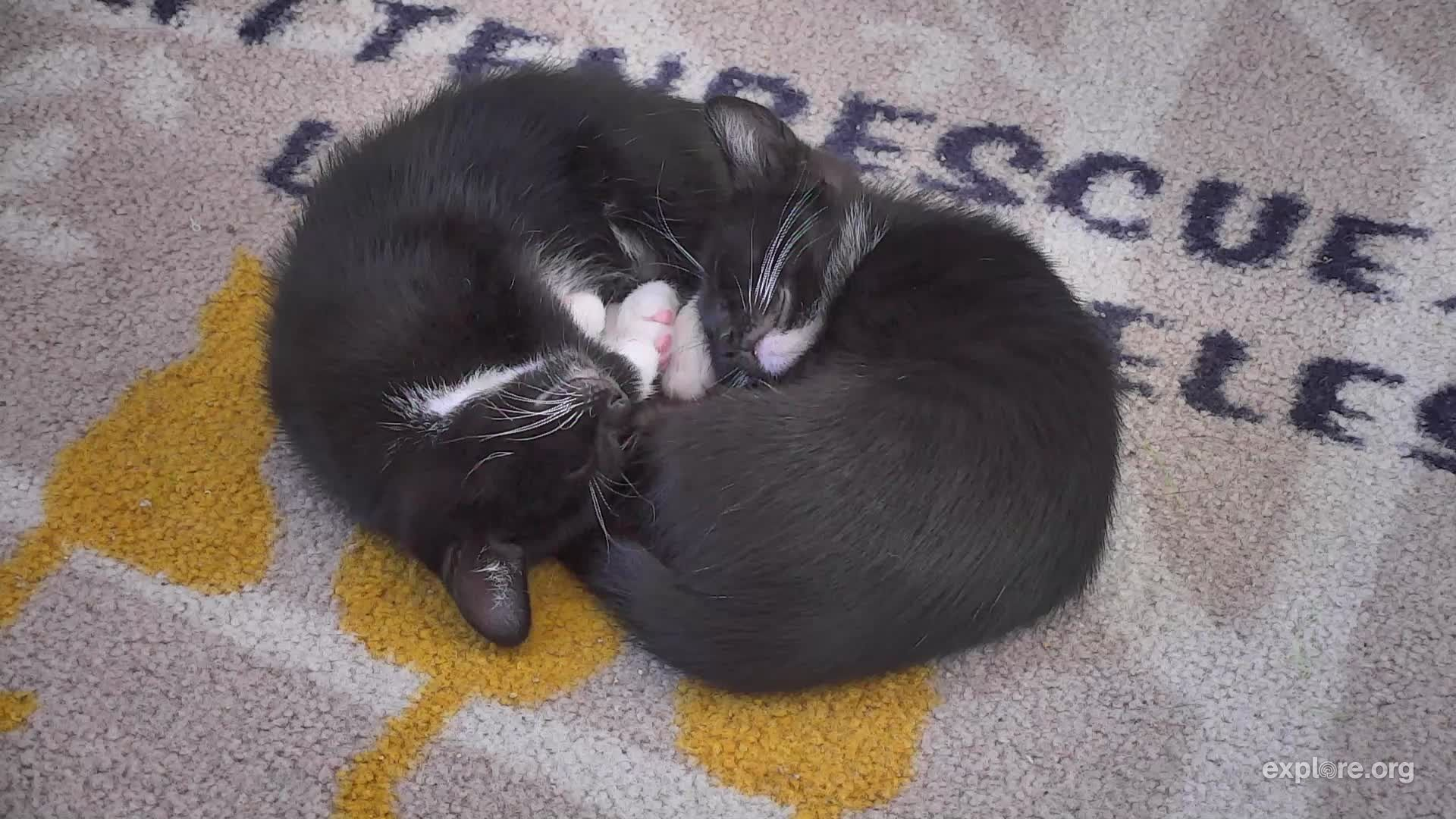 I M Watching The Kittenrescue Cam On Explore Org Streaming Live From Los Angeles Ca Snapshots Cats Animals