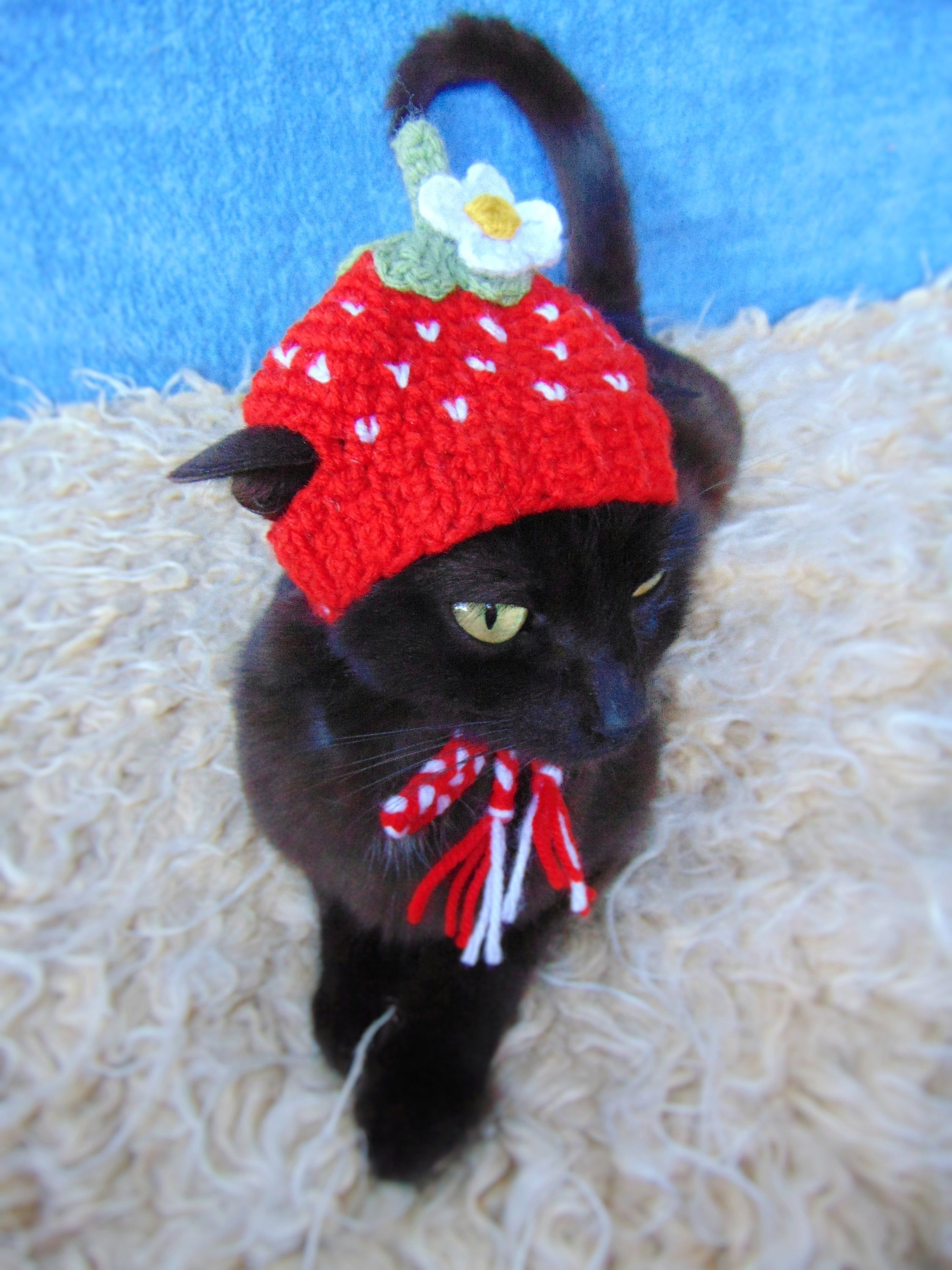 Strawberry Hat For Cat Hat For Kitten Fruit Cat Outfit Etsy Pet Halloween Costumes Cat Clothes Pet Costumes Cat