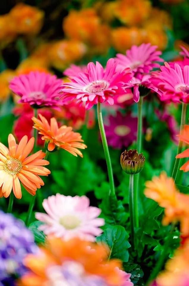 love bright beautiful colorful flowers!!!!!