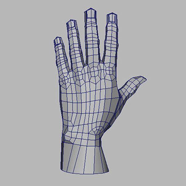Human Hand 3d Model Human Anatomy For Artists Polygon Modeling 3d Model
