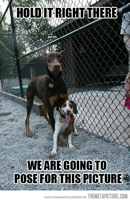 And You Are Going To Smile Las Mejores Razas De Perros Razas De Perros Perros