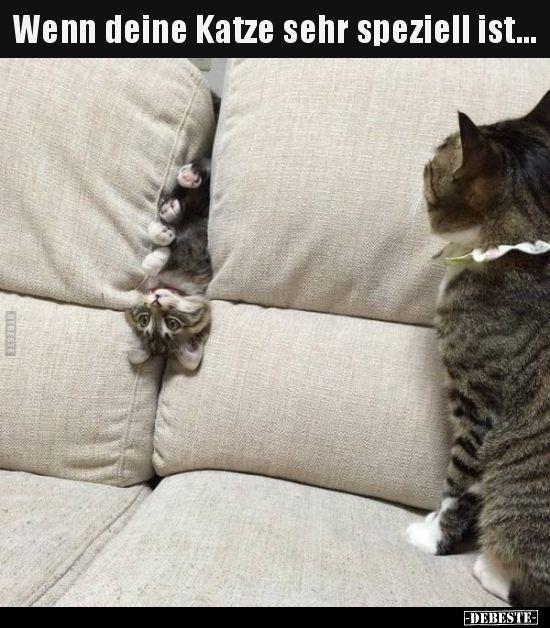 Wenn deine Katze sehr speziell ist...