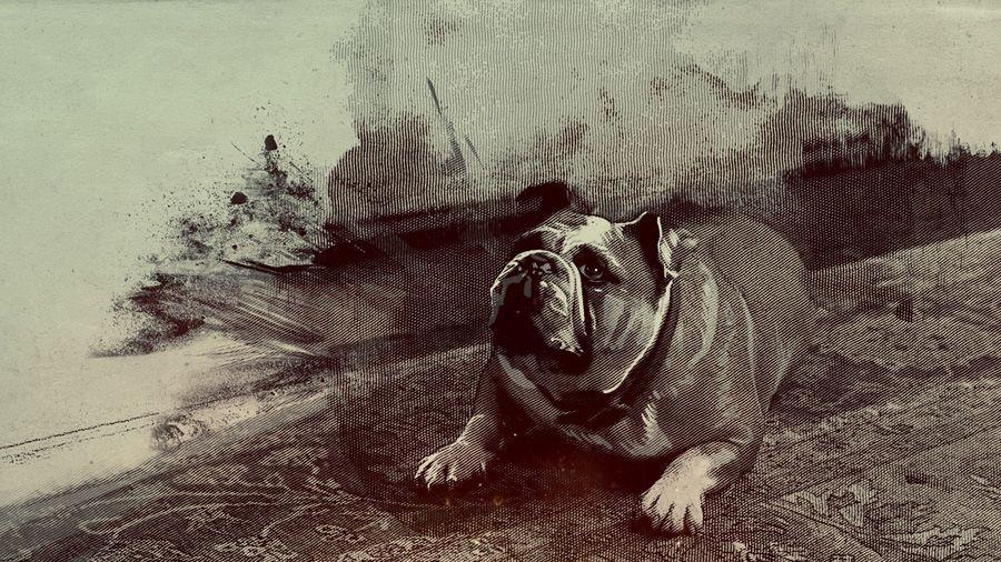 Sherlock Holmes Bulldog Graphic Projects Dog Art Graphic