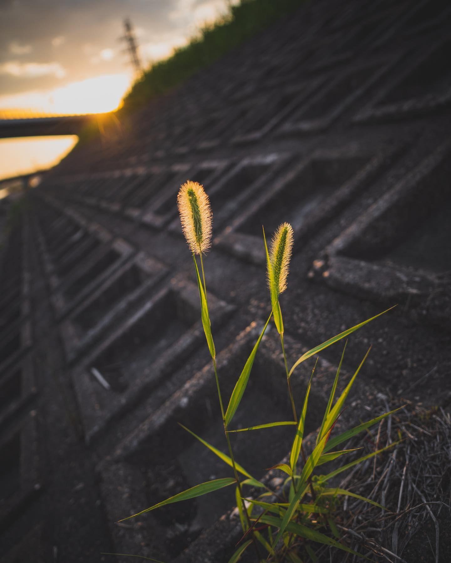 Sunset  #onichie #osaka #japan #osakajapan #大阪 #日本 #オニッチ #おにっち #fromosaka #fromjapan #omg #onichiemusicgarage #ツァイスBatisで撮りたい #aestheticsjapan #shotonlexar #ricoh #ricohgr #gr3 #griii #リコーGR #リコーGR3 #sunset #sky #夕陽 #夕焼け