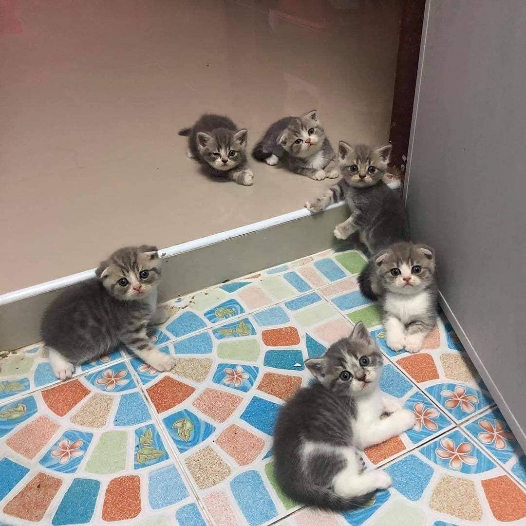 Kittens Cats Cute Catlovers Pets Petlove Cute Cats Photos Kittens Cutest Cats And Kittens