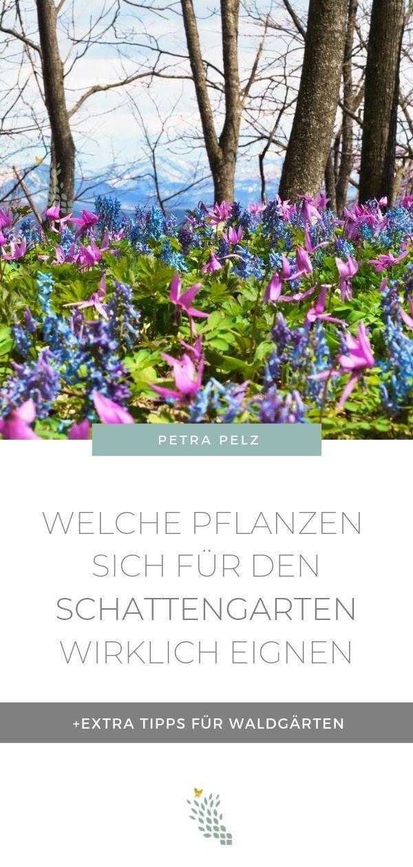 Waldgarten - Pflanzen die im Schatten wachsen - Design Natürlich Petra Pelz - Garten-Workshops & Sem