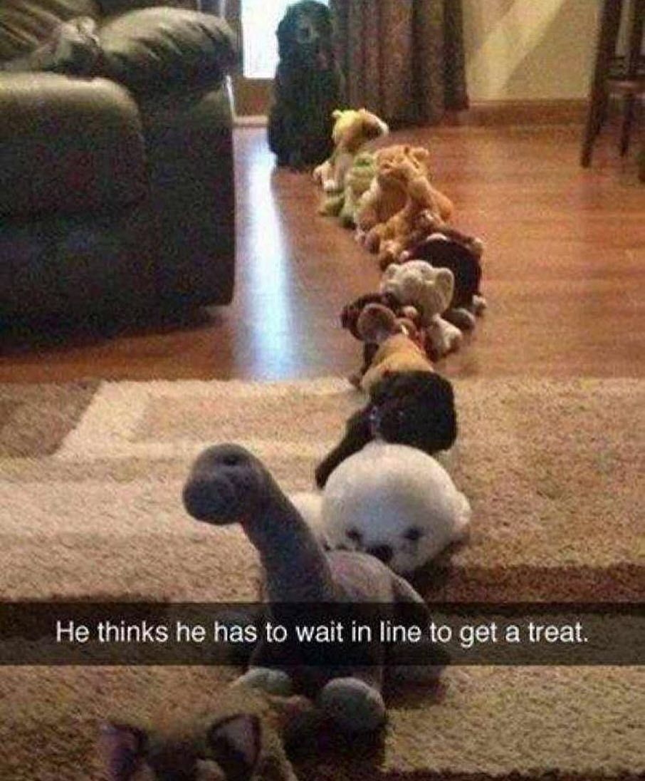 50 Funny Memes 2019 Cute Animal Memes Funny Animal Jokes Funny Animal Quotes