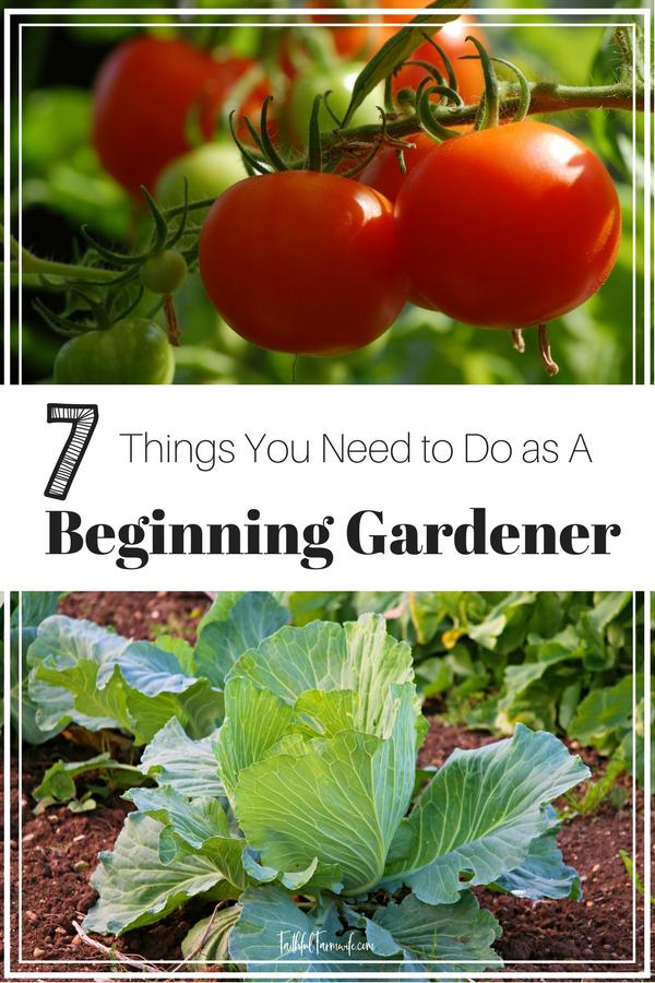d9a2e91c50deff867f9efff8957857dd - Gardeners World Magazine Free Tomato Seeds