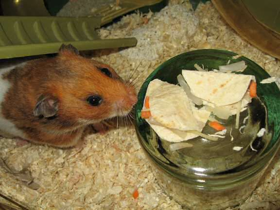 http://hamstertracker.com/Cookin4LucyDetail.html   great site on acceptable hamster snacks from people food