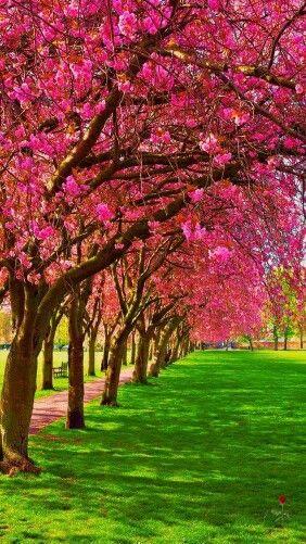 May You Always Walk In Beauty And Peace Lindas Paisagens Fotografia De Paisagem Lindas Imagens Da Natureza