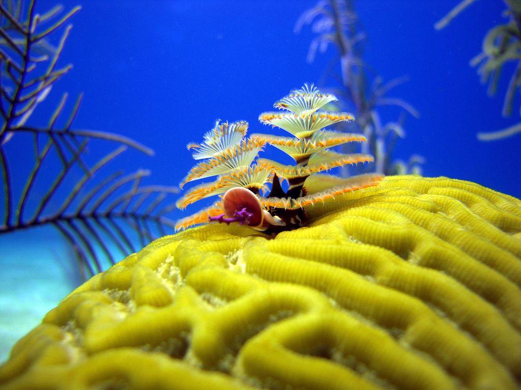 Christmas Tree Worms Turks And Caicos Deep Sea Creatures Sea Creatures Creatures