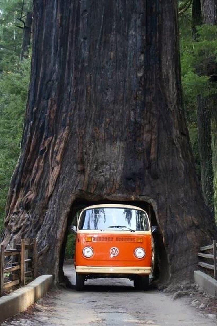 Sequoia national park california a natureza divina drive thru tree sequoia national forest california omg when i was a little girl we drove through the drive thru tree in a volkswagon van too arubaitofo Gallery