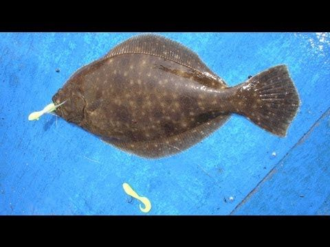 How To Tie And Fish A Flounder Bucktail Rig Flounder Fishing Fishing Bait Saltwater Fishing