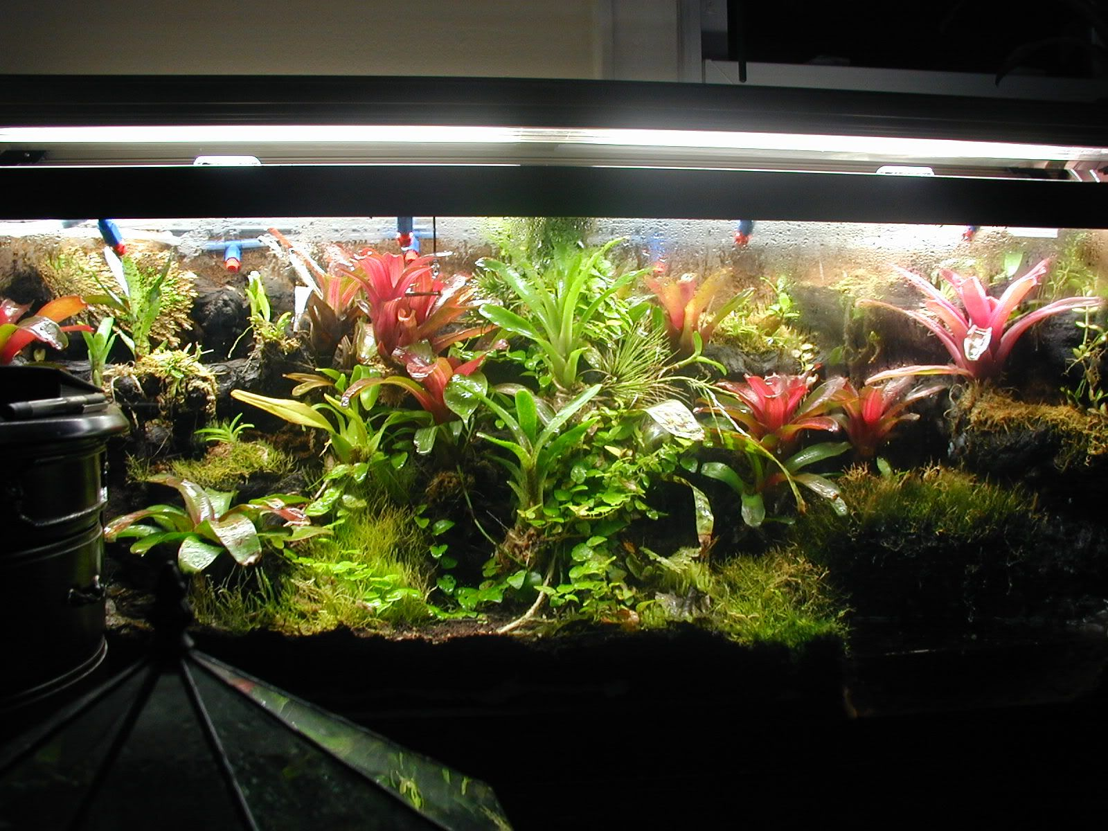 Living Terrarium. Living Terrarium 1000 Images About Terrariums Planters  Gardens Spotlight Java