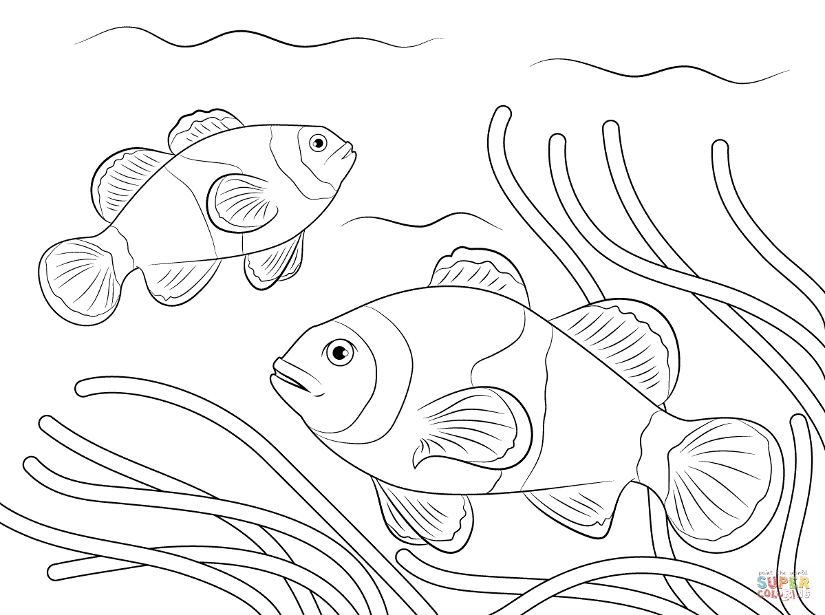 Ocellaris Clownfish Fish Coloring Page Coloring Pages Bear Coloring Pages