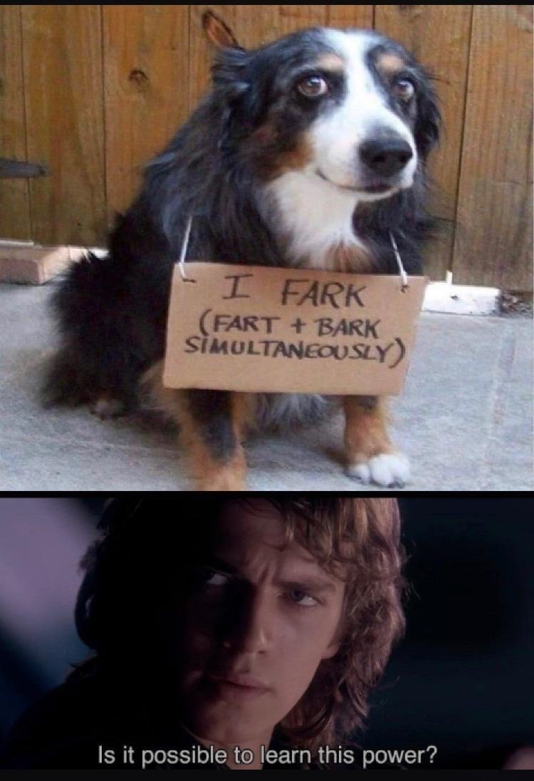 Monday Morning Randomness To Start Your Week In 2021 Dog Memes Funny Memes Funny Dog Memes
