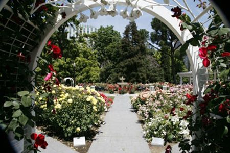 Inspiration Of The Week World Peace Rose Garden At Capitol Park