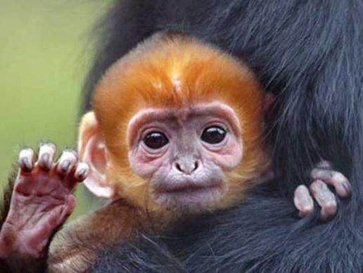 Monkeyyyy!!!!