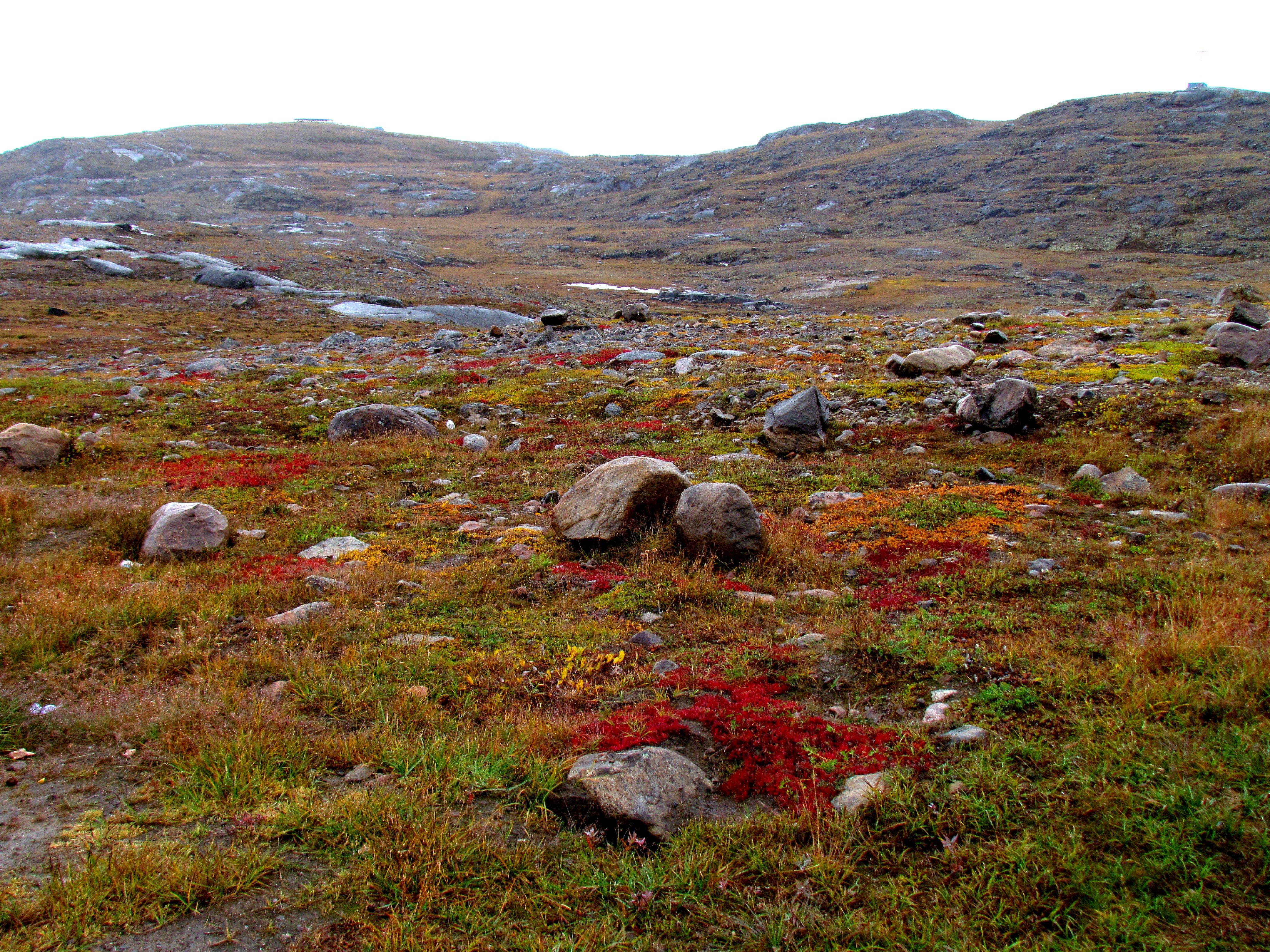 Arctic tundra covers parts of extreme northern Canada