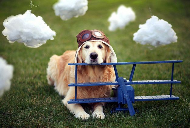 I M The Pilot Of My Own Dreams Happy Dogs Dogs Animals