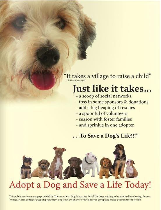 Adopt 25 Poo Bear Adopted On Petfinder Save A Dog Dog Adoption Really Cute Puppies