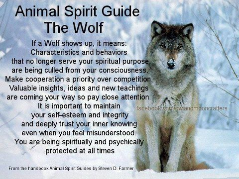 Animal Spirit Guide The Wolf Witches Of The Craft Witchy