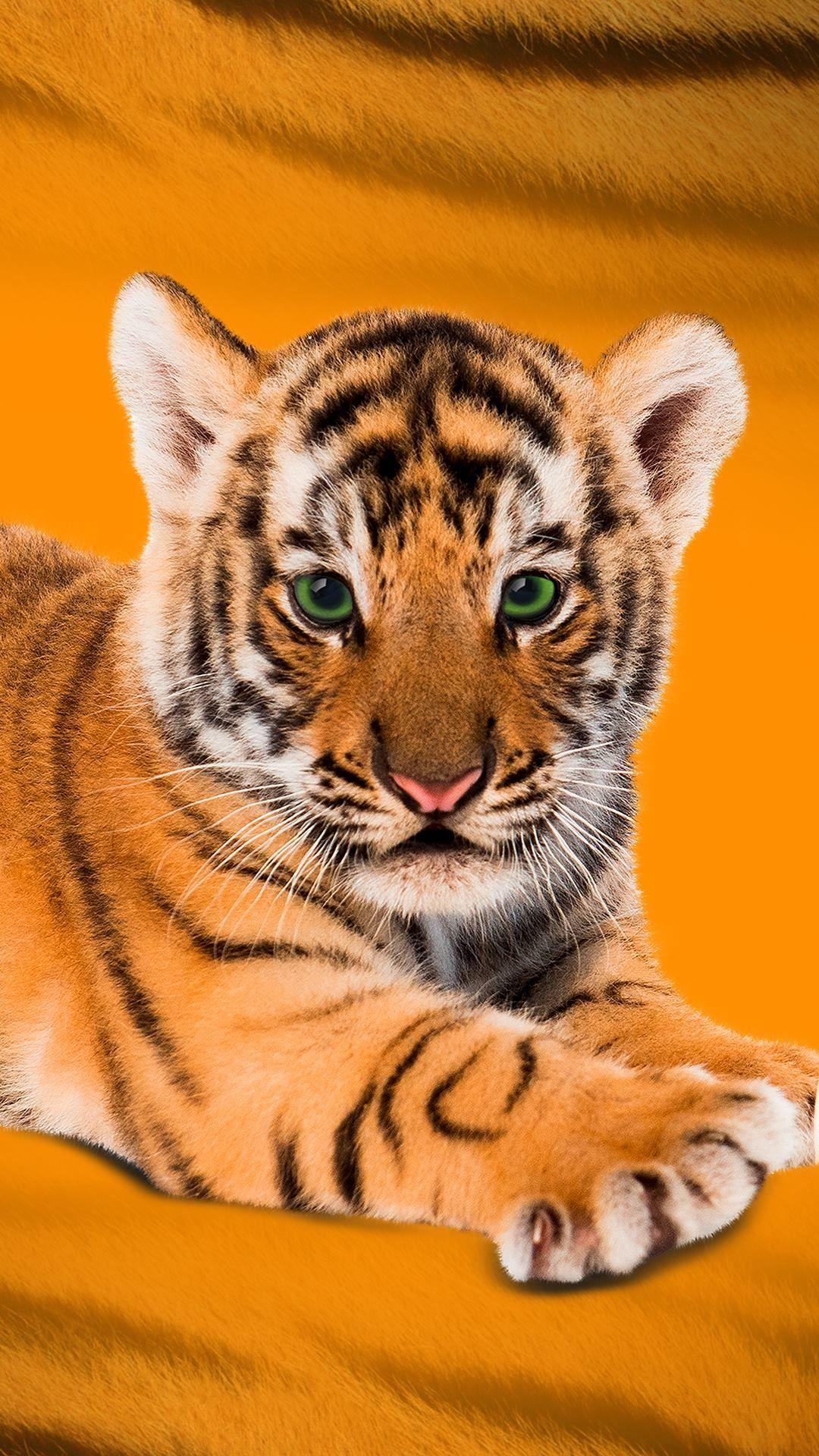 Pin von Shannon auf Tyger Tyger | Pinterest | Babytiger, Tier und ...