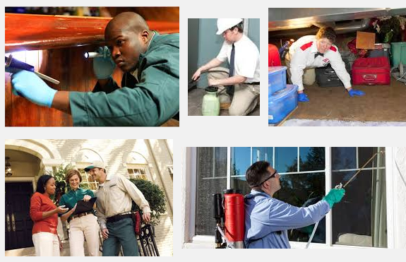 Pest Control Technician Is Required in Brisbane on Jobstar
