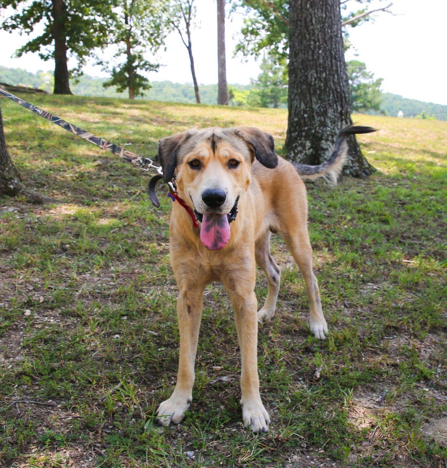 Adopt Duke on Dog adoption, Paws rescue, Shepherd dog mix