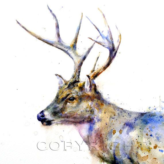 Whitetail Deer Watercolor Print By Dean Crouser Malen In 2019