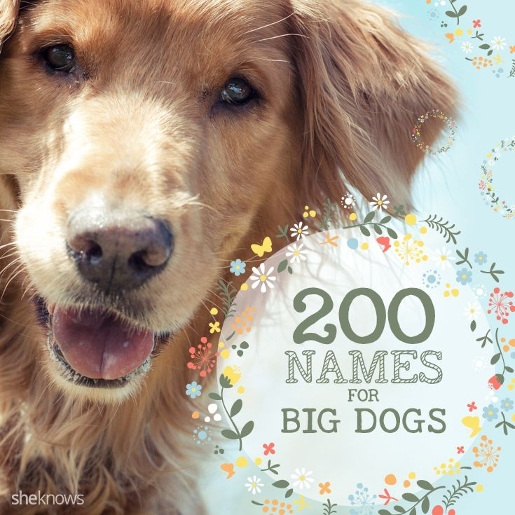48+ Cute puppy names for big dogs ideas in 2021