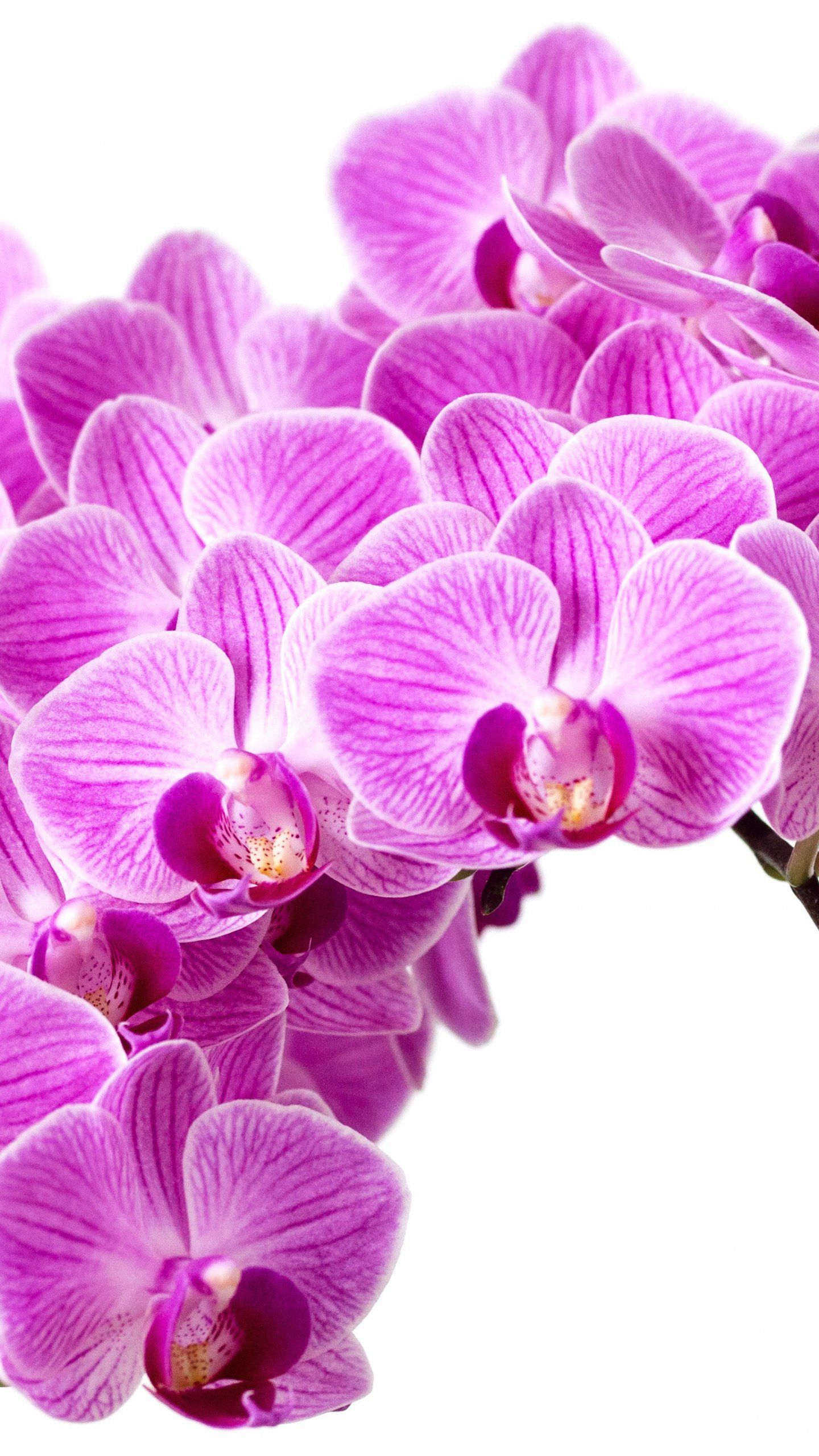 Purple Orchid Wallpaper Iphone Android Desktop Backgrounds Orchid Wallpaper Purple Orchids Flower Wallpaper