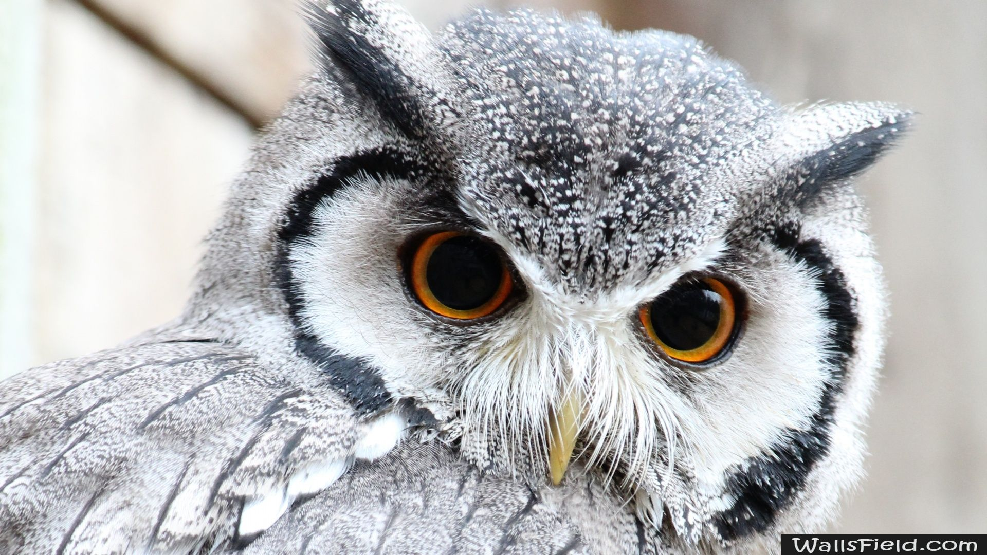 Cute owl pinterest free hd wallpapers hd wallpaper and owl you can view download and comment on cute owl free hd wallpapers for your desktop voltagebd Images