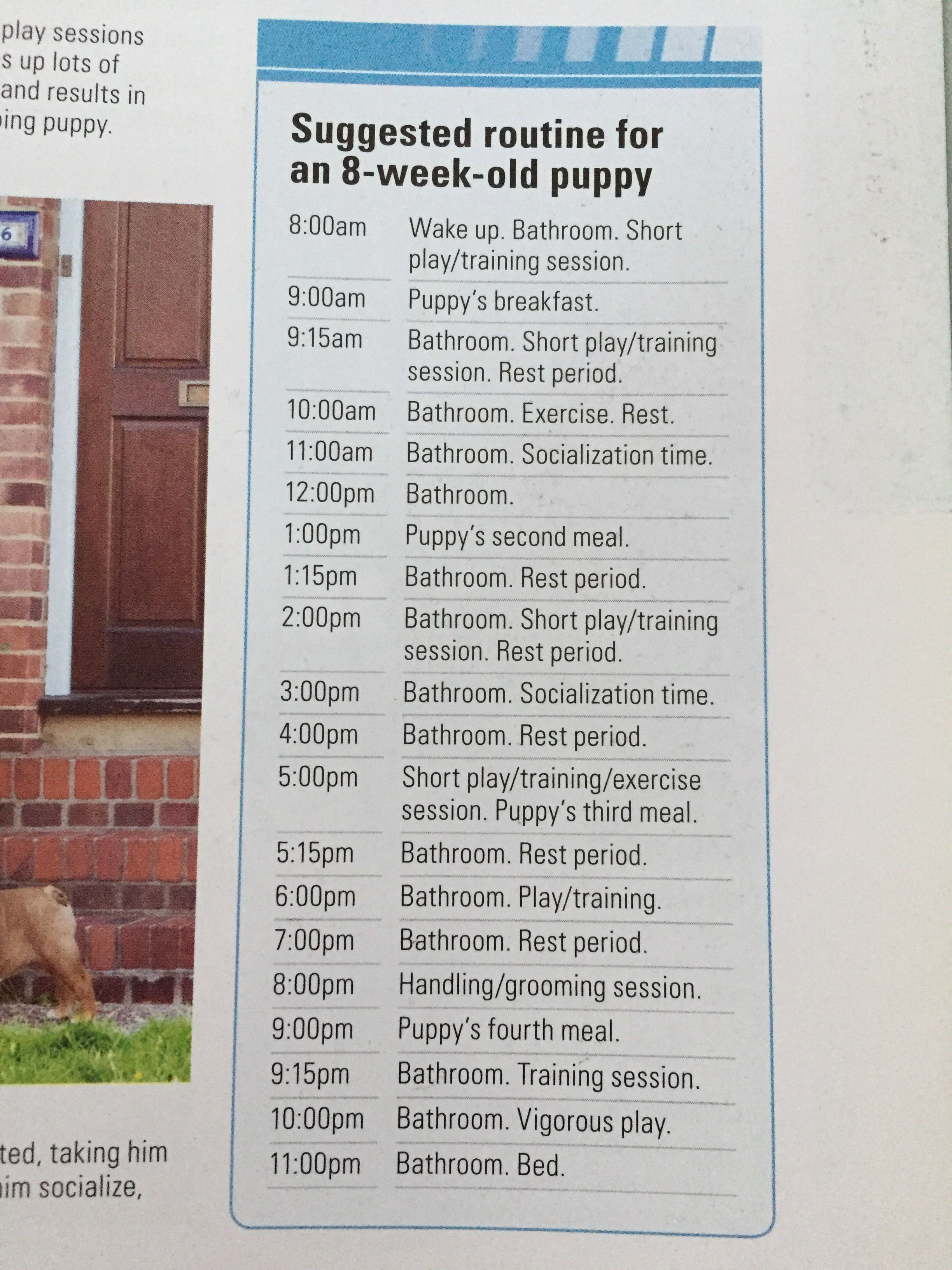 Puppy Feeding Schedule Look At The Chart Follow The Tips
