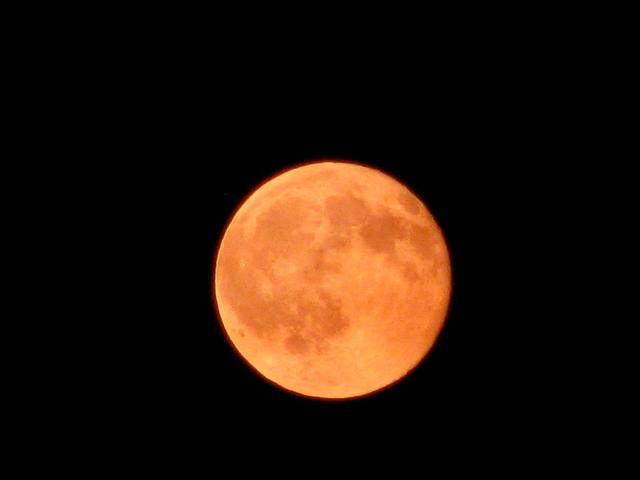 Pumpkin colored Harvest Moon