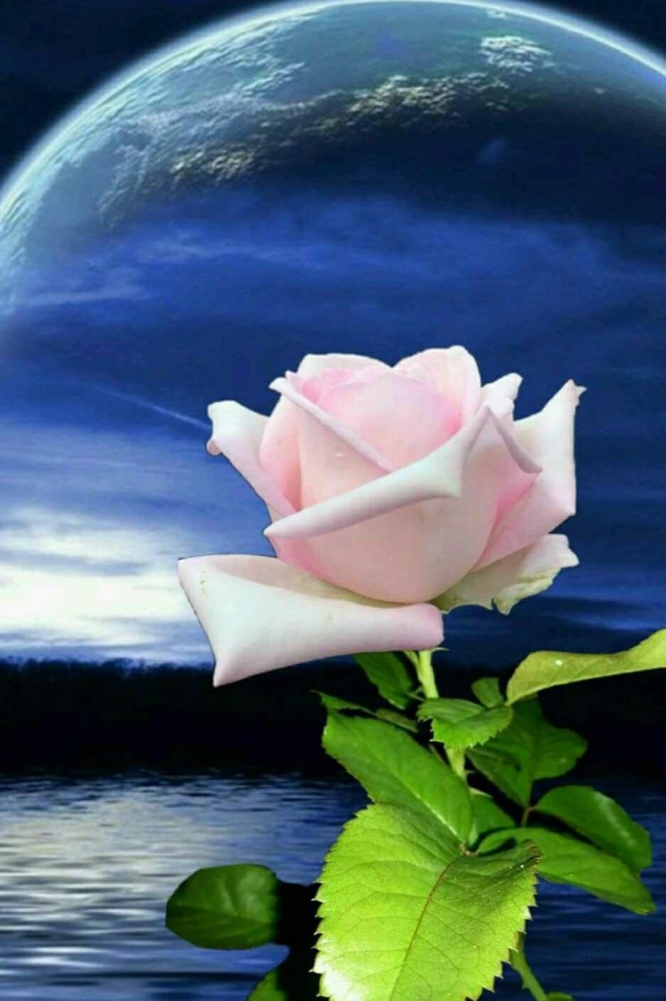 flowerheart pinterest moon discover ideas about beautiful moon izmirmasajfo