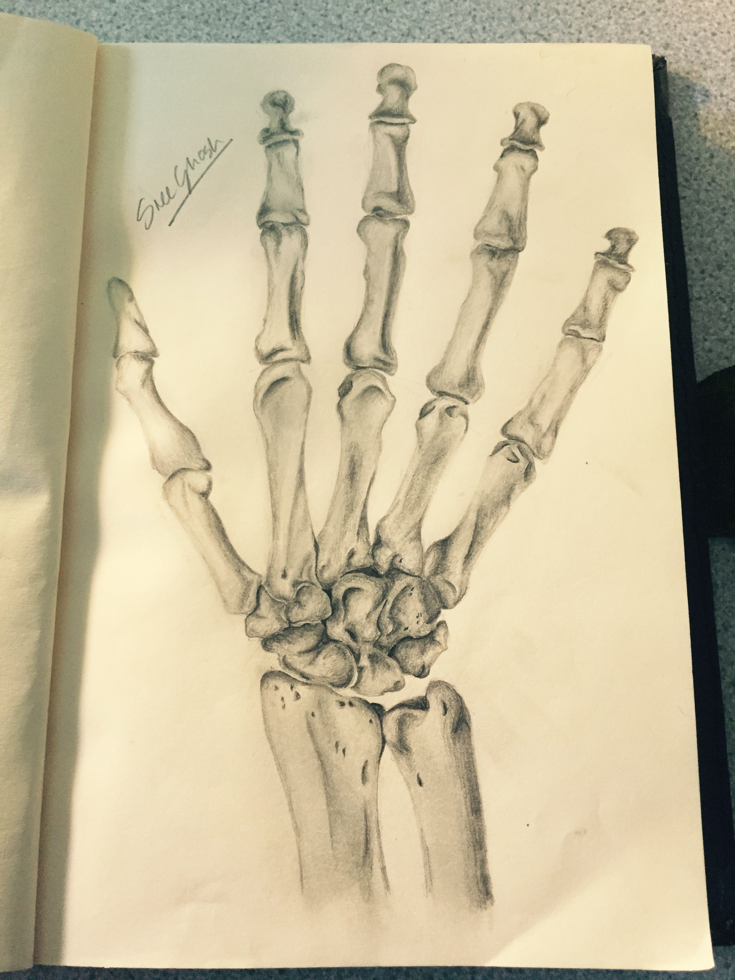 Part three of anatomy sketches: bones of the right hand - dorsal ...