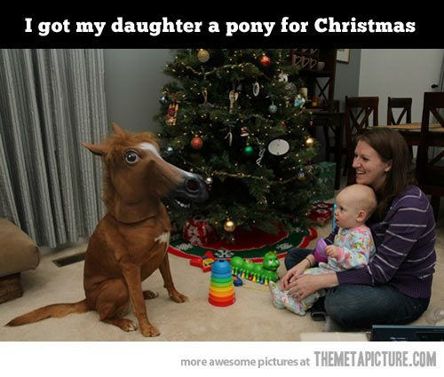 My daughters christmas gift pony humour and hilarious my daughters christmas gift negle Choice Image