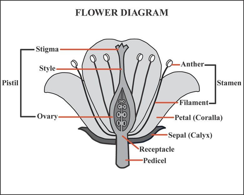 Flowers - Parts of a Plant Worksheet 1 | Worksheets
