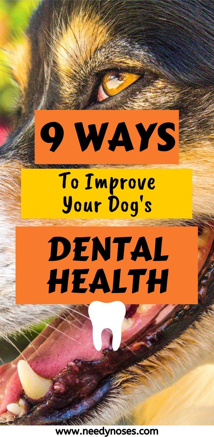 Does your dog have bad breath and yellow teeth? Keeping