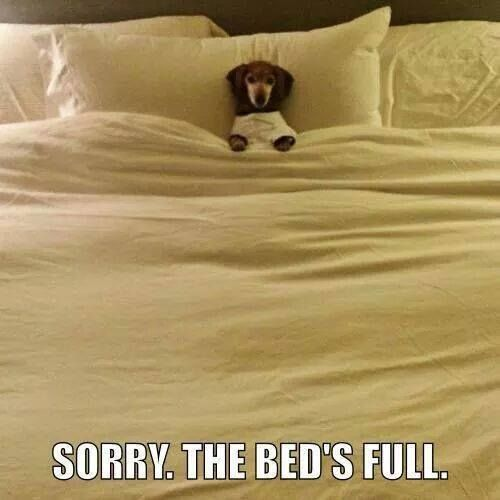 Bed Hog Animal Jokes Funny Dog Pictures Funny Animal Pictures