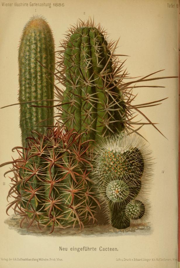 Jahr 11 1886 Wiener Illustrirte Garten Zeitung Biodiversity Heritage Library Botanical Drawings Botanical Prints Cactus Art