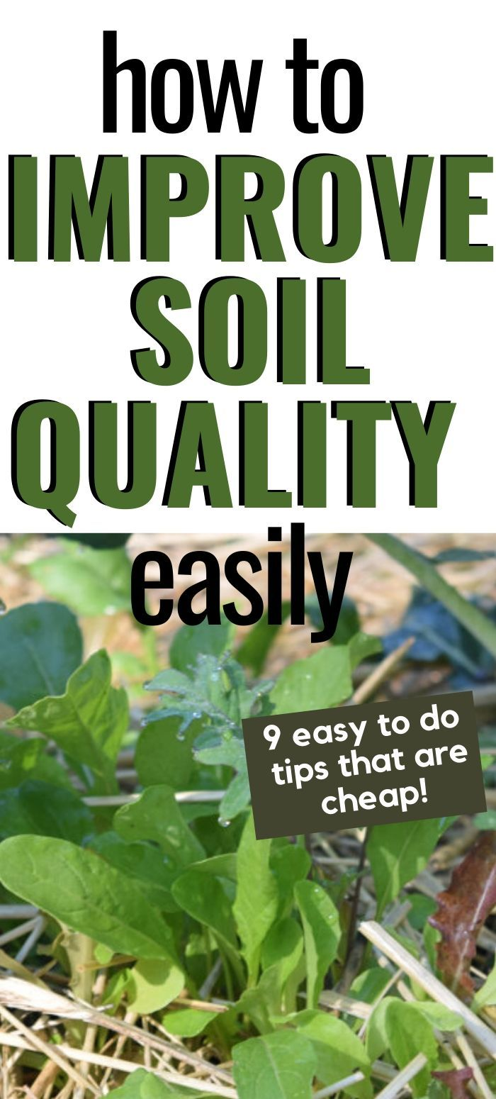 How to Improve Soil Quality In Your Garden · Hidden Springs Homestead