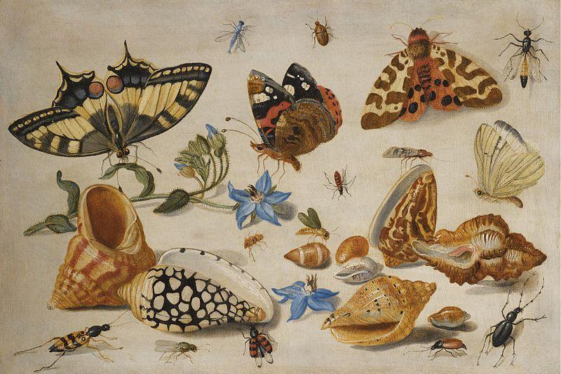 Vlinders en andere insecten, mosselen, slakken, John van Kessel, 1659